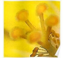 Yellow Mellow © Poster