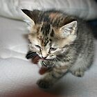 cute kitten cleaning claw by Cre8aDeb8