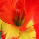 Red and Yellow Glads by Nancy Polanski
