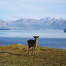 Deer by Kathryn Steel