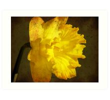 Playing with a daffodil... Art Print