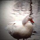 Shy Duck by tornadowinds