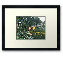 You are the Queen of my garden... Framed Print