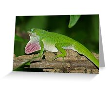 Green Anole,Anolis carolinensis Greeting Card