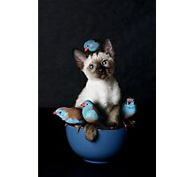 Bird Puss Photographic Print