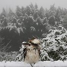 Wet kooka by Robyn Lakeman