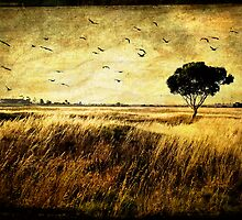 Flock of Seagulls by Wulff