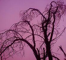 creepy tree by bellebuckley