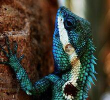 Lizard Scales- Phu Kradeung National Park, Thailand by Kelsi Doscher