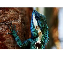 Lizard Scales- Phu Kradeung National Park, Thailand Photographic Print