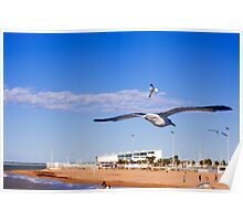 Seagull on Chipiona Poster