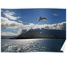Seagulls over Queenstown Poster