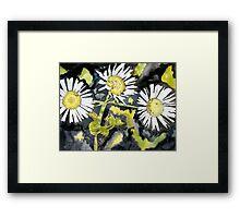 heath aster flower watercolor painting Framed Print