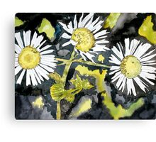 heath aster flower watercolor painting Canvas Print
