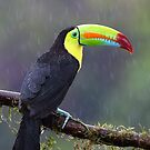 Keel-billed toucan by Jim Cumming