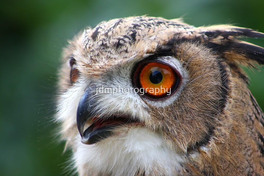 17 Week Old Turkmenian Eagle Owl by jdmphotography