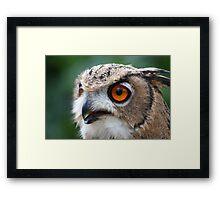17 Week Old Turkmenian Eagle Owl Framed Print