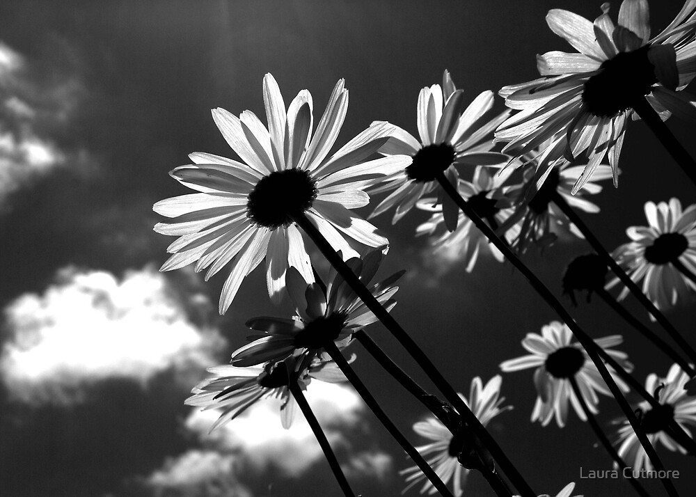 Shine through. by Laura Cutmore