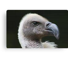 White-backed Vulture Portrait Canvas Print