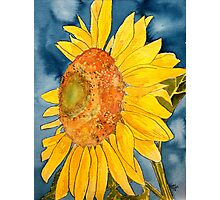 macro sunflower watercolor painting Photographic Print