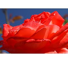 complementary colours Photographic Print