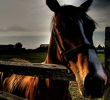 Horse by Ricky Wilson