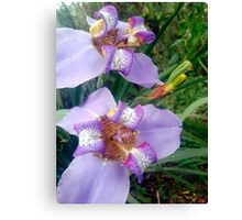 Walking Iris Canvas Print
