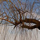 The Trees Of Beihai Park © by © Hany G. Jadaa © Prince John Photography