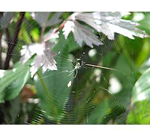 spider of glass Photographic Print