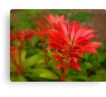 red foliage Canvas Print
