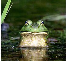 Bullfrog  Photographic Print