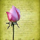 Bouton de Rose by Gilberte
