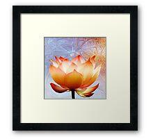 Sunshine Lotus Framed Print