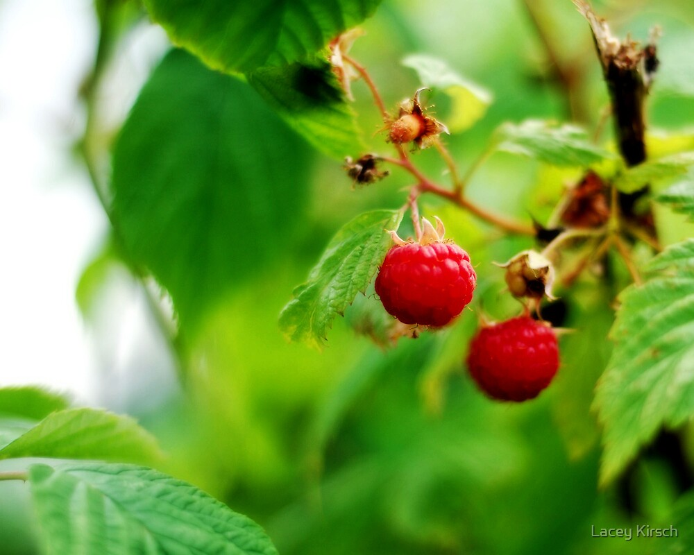 Summer Berries by Lacey Kirsch