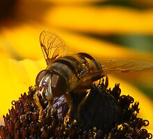 Busy Bee by ronibgood