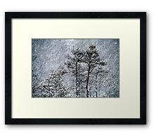 23.1.2015: Pine Trees in Blizzard III Framed Print