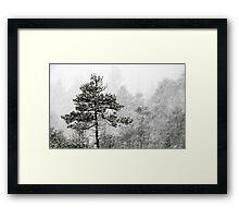 23.1.2015: Pine Trees in Blizzard V Framed Print