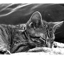 Kitten Sleeping Photographic Print