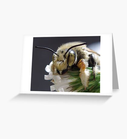 Leafcutter Bee Greeting Card