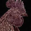 Rooster by David  Postgate