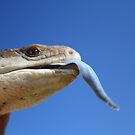 Blue Tounge by tracyleephoto