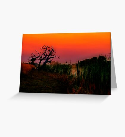 """Creekside at Dawn"" Greeting Card"
