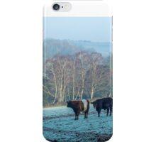 Belted Galloways grazing in winter iPhone Case/Skin