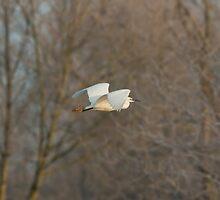 Egret Flight by Ashley Beolens
