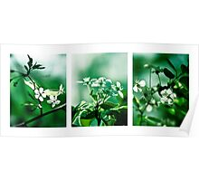 Collage White Cherry Blossoms Poster