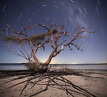 Reaching for the Stars by Garry Schlatter