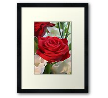 Red Rose with Garden Background Framed Print