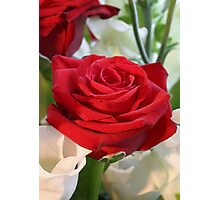 Red Rose with Garden Background Photographic Print