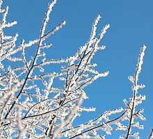frost trees covered against the blue sky by mrivserg