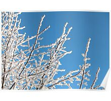 frost trees covered against the blue sky Poster